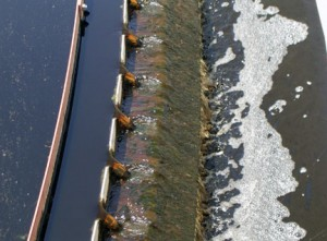 Secondary clarifier showing minor algae cover on weirs